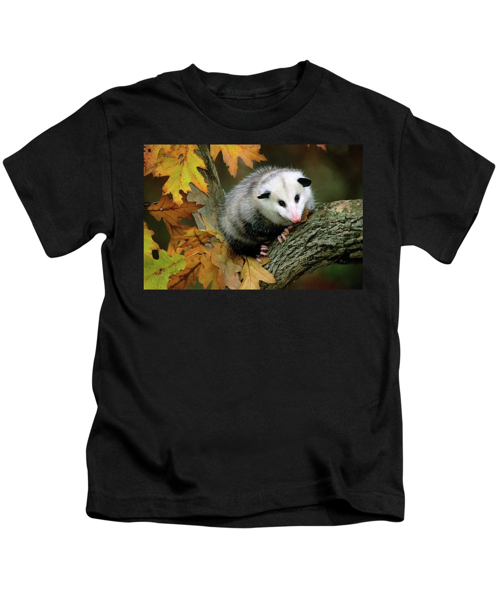 Photography Kids T-Shirt featuring the photograph Opossum In Tree by Animal Images