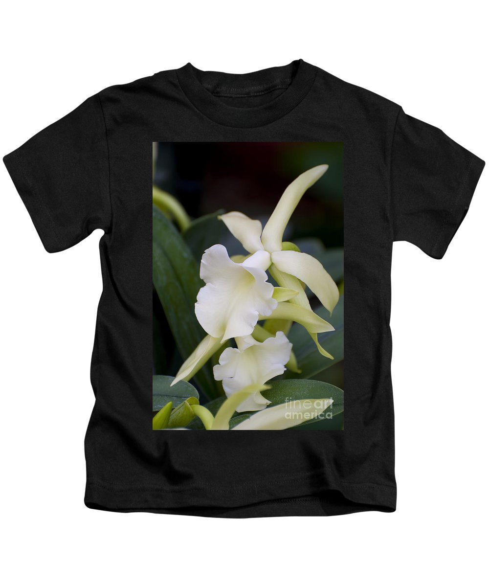 Orchids Kids T-Shirt featuring the photograph Orchids Pictures 53 by World Wildlife Photography