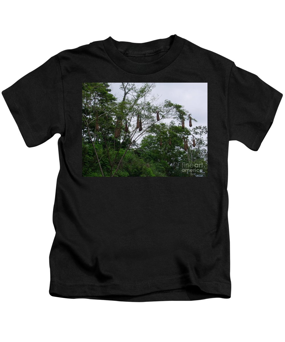Oriole Kids T-Shirt featuring the photograph Oriole High Up In The Jungle Canopy by Jennifer E Doll