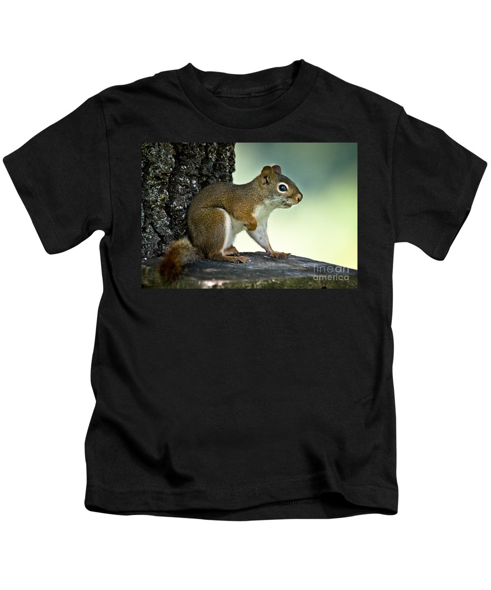 Squirrel Kids T-Shirt featuring the photograph Perky Squirrel by Cheryl Baxter