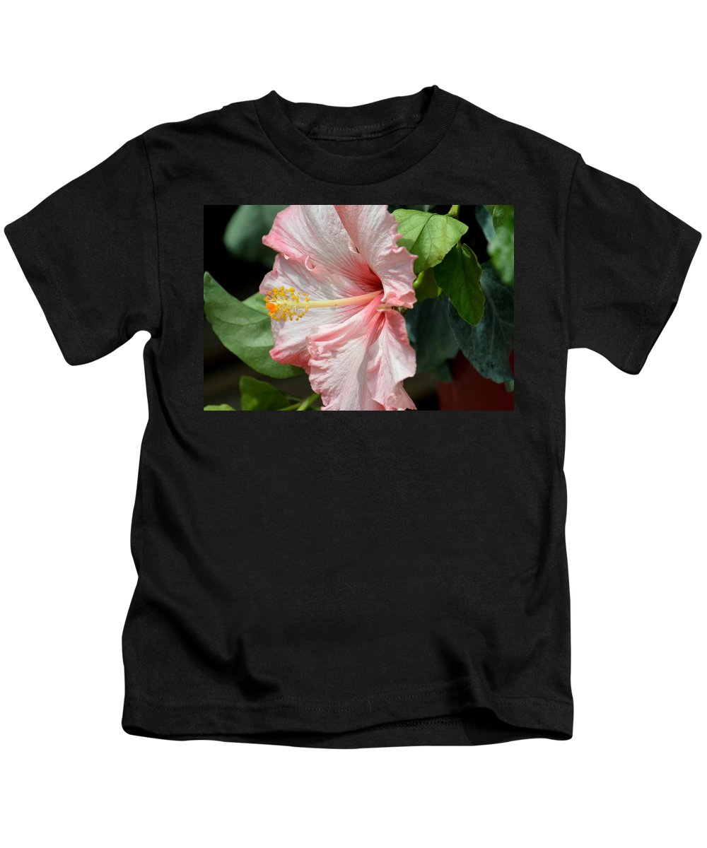 Pink Lady 2013 Kids T-Shirt featuring the photograph Pink Lady 2013 by Maria Urso