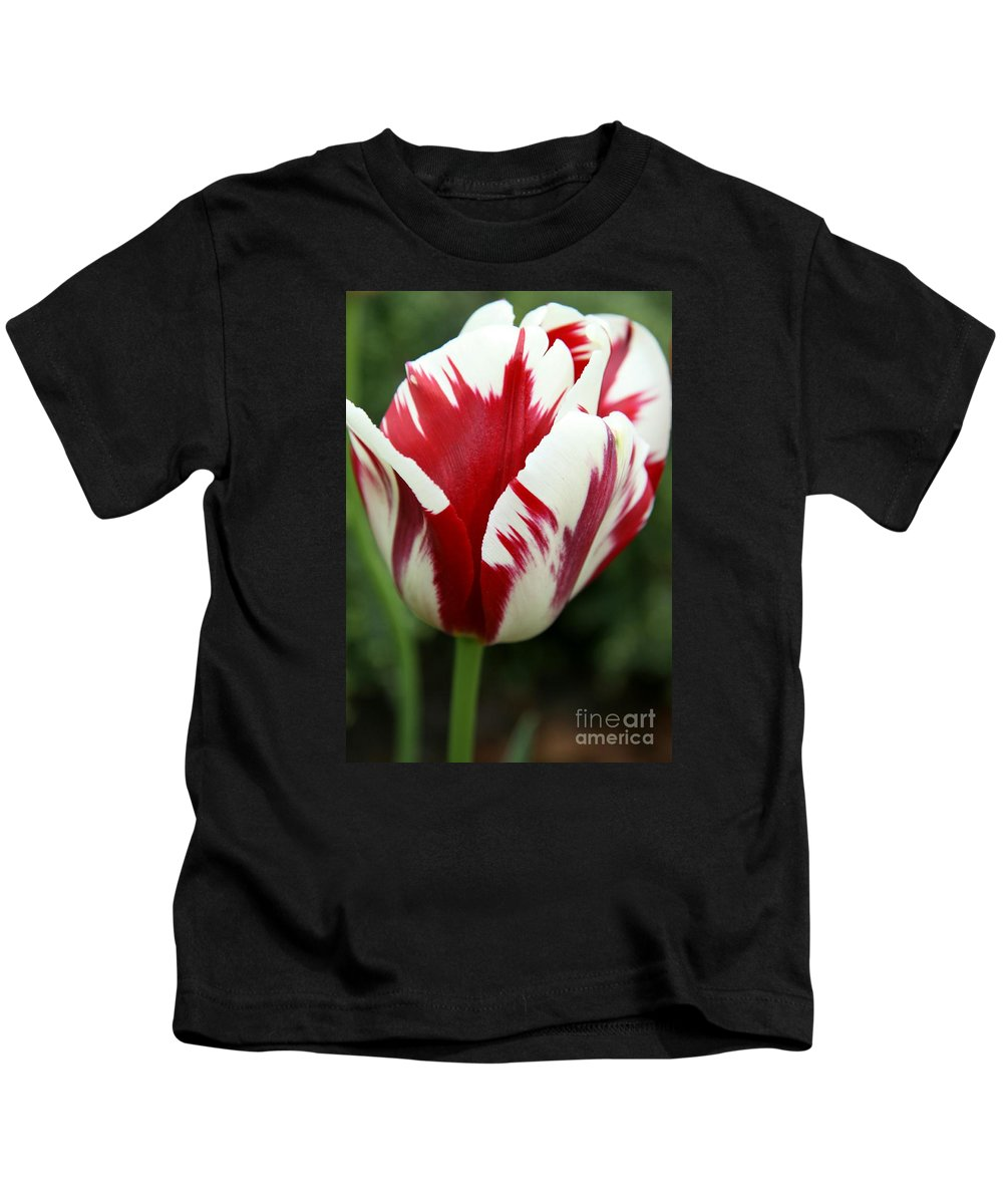 Tulip Kids T-Shirt featuring the photograph Red And White by Christiane Schulze Art And Photography