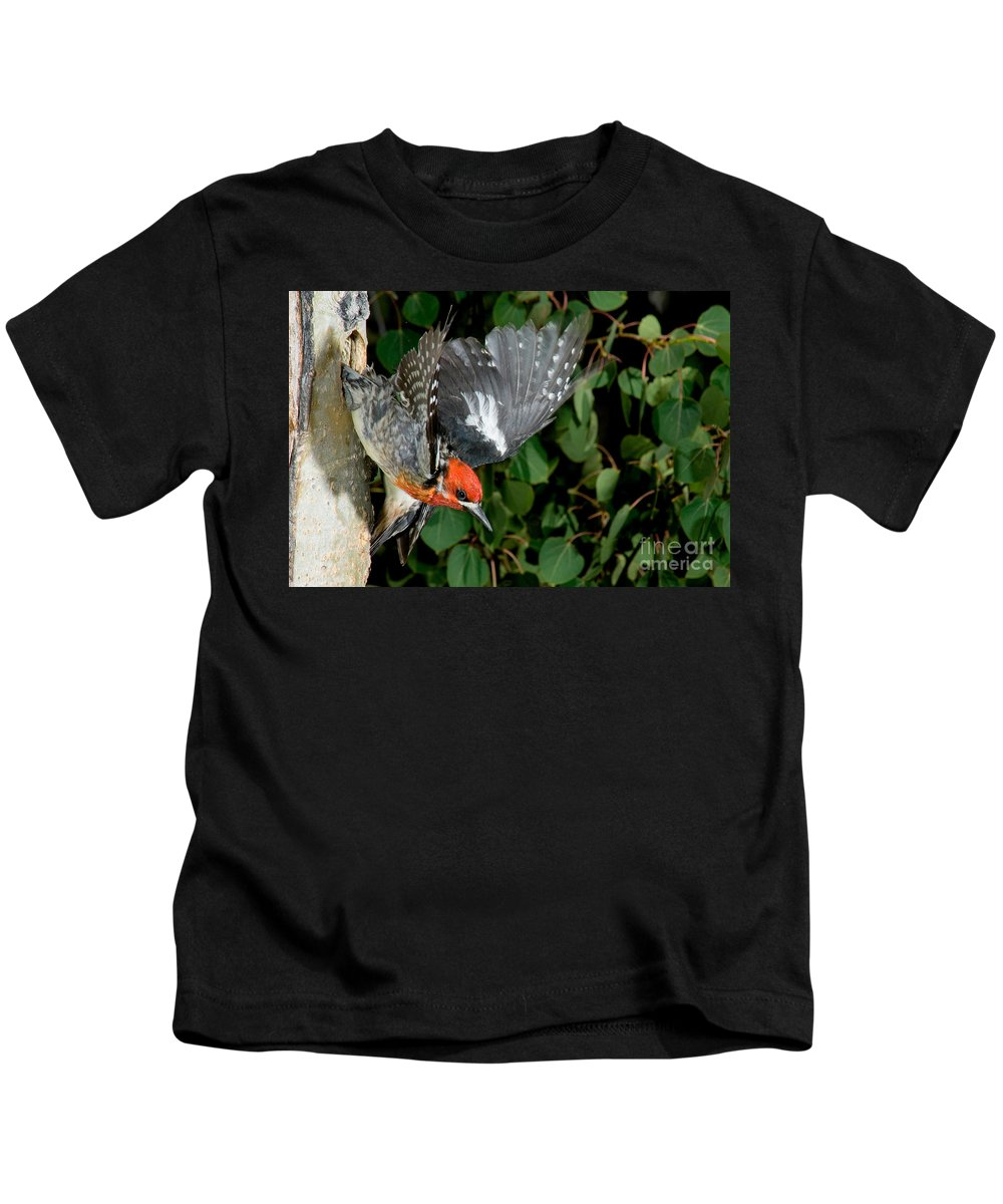 Fauna Kids T-Shirt featuring the photograph Red-breasted Sapsucker by Anthony Mercieca