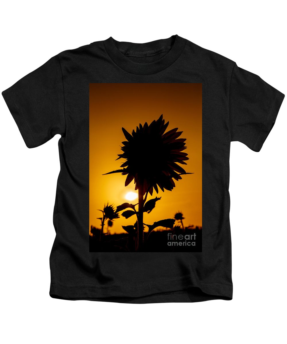 Sunflowers Kids T-Shirt featuring the photograph Silhouette Of The Sunflower by Terri Morris