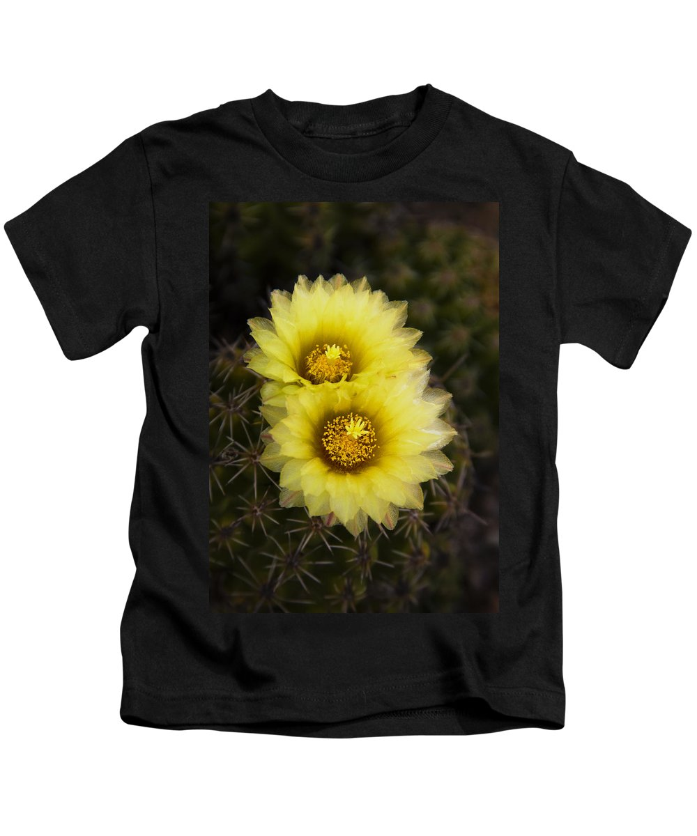 Yellow Cactus Flowers Kids T-Shirt featuring the photograph Simply Golden Cactus Flowers by Saija Lehtonen