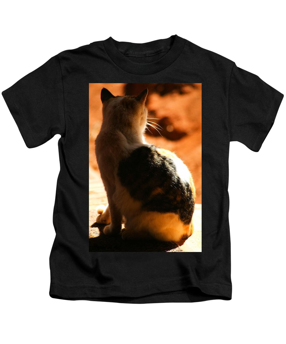 Cat Kids T-Shirt featuring the photograph Sun Cat by Tracey Beer