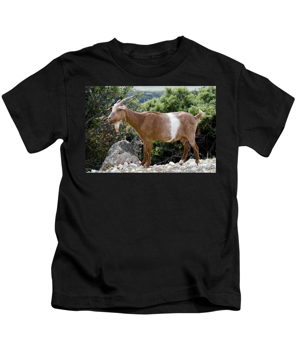 Gorges De L'ardèche France Gorge Canyon Canyons Mountain Goat Goats Animal Animals Creature Creatures Nature Horn Horns Kids T-Shirt featuring the photograph Sure Footed by Bob Phillips