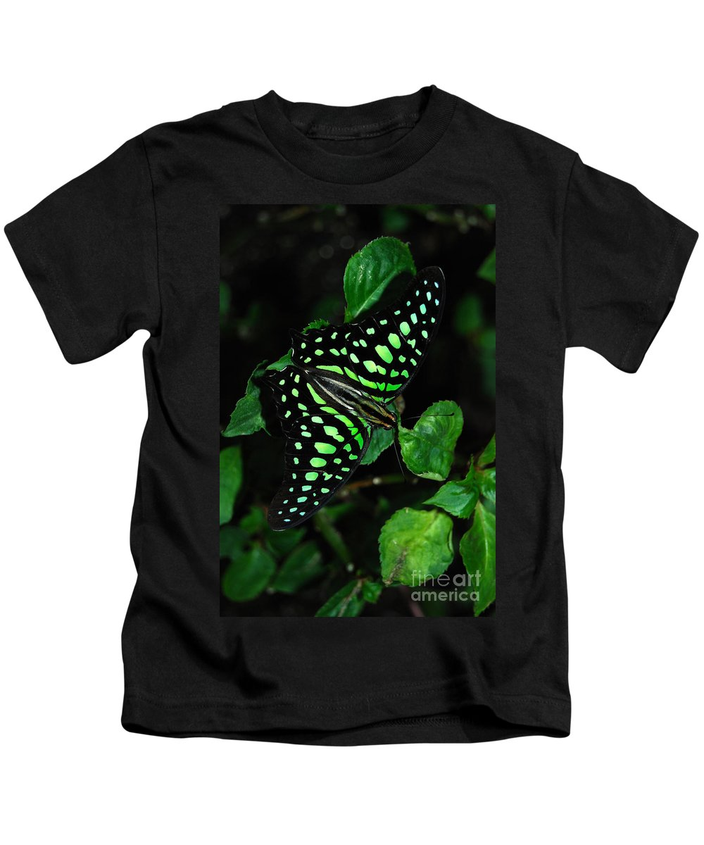 Tailed Jay Butterfly Kids T-Shirt featuring the photograph Tailed Jay Butterfly by Eva Kaufman