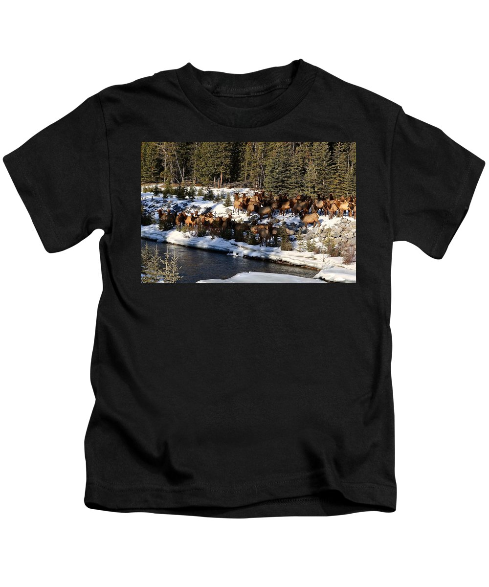 Elk Kids T-Shirt featuring the photograph The Herd by Stephanie Bland