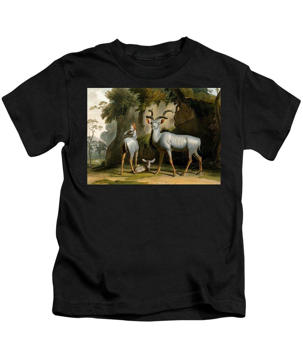 Koodoo Kids T-Shirt featuring the drawing A Kudus Or Kudu by Samuel Daniell