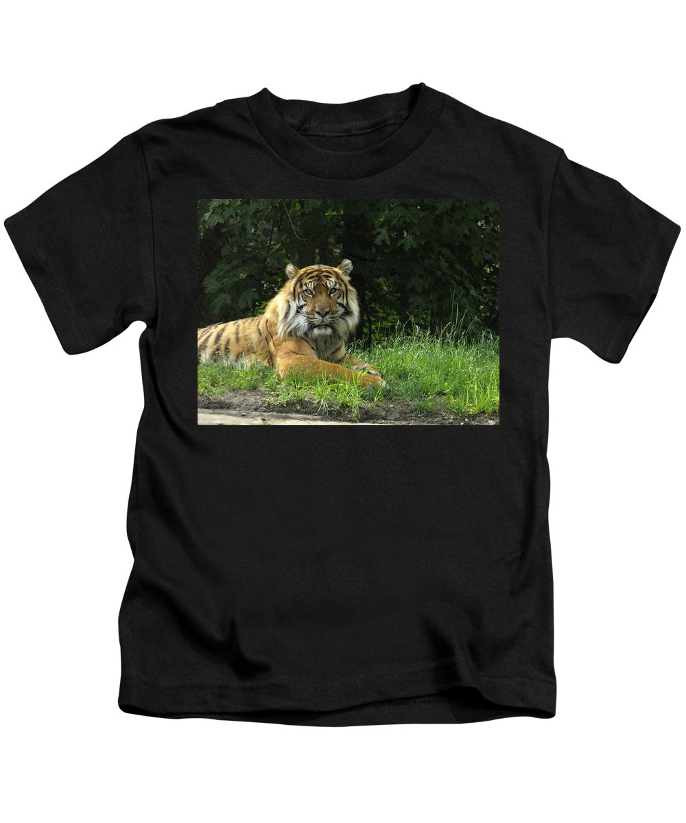 Siberian Tiger Kids T-Shirt featuring the photograph Tiger At Rest by Lingfai Leung