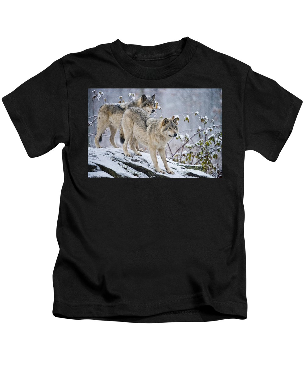 Timber Wolf Kids T-Shirt featuring the photograph Timber Wolf Pictures 1417 by World Wildlife Photography