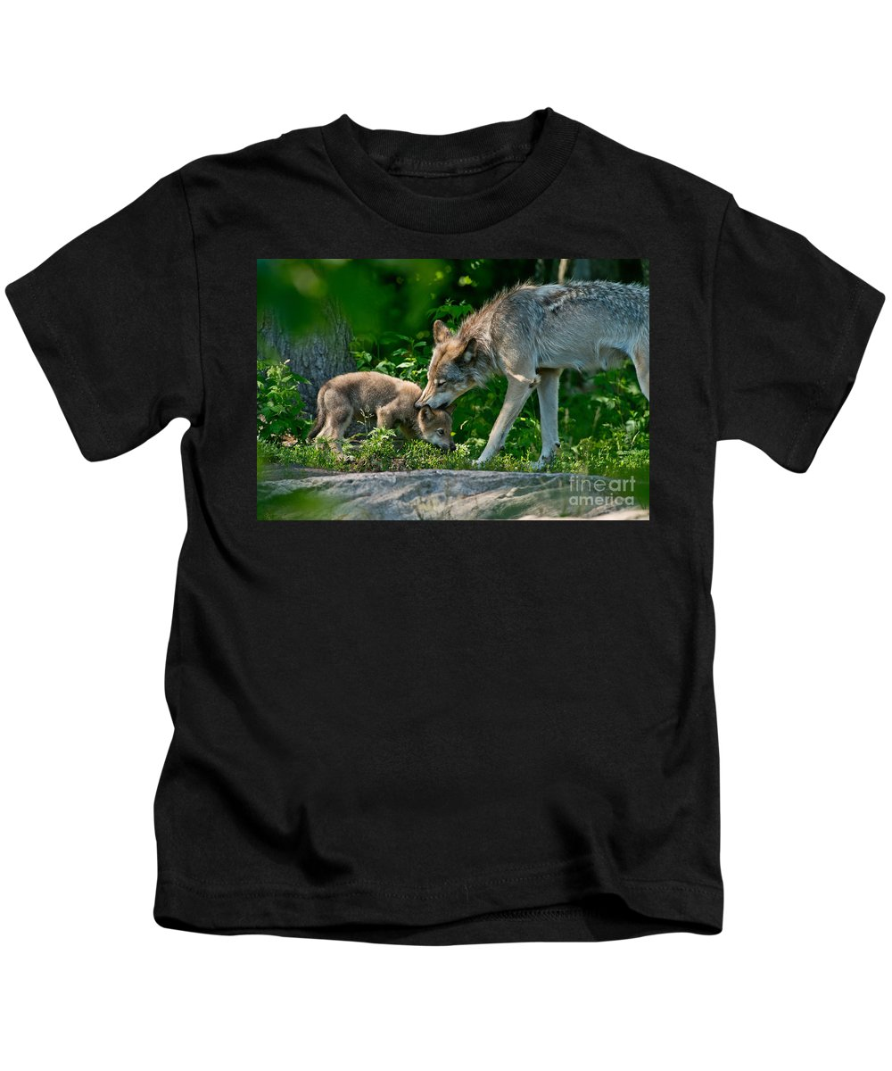 Timber Wolf Canvas Kids T-Shirt featuring the photograph Timber Wolf Pictures 332 by Wolves Only