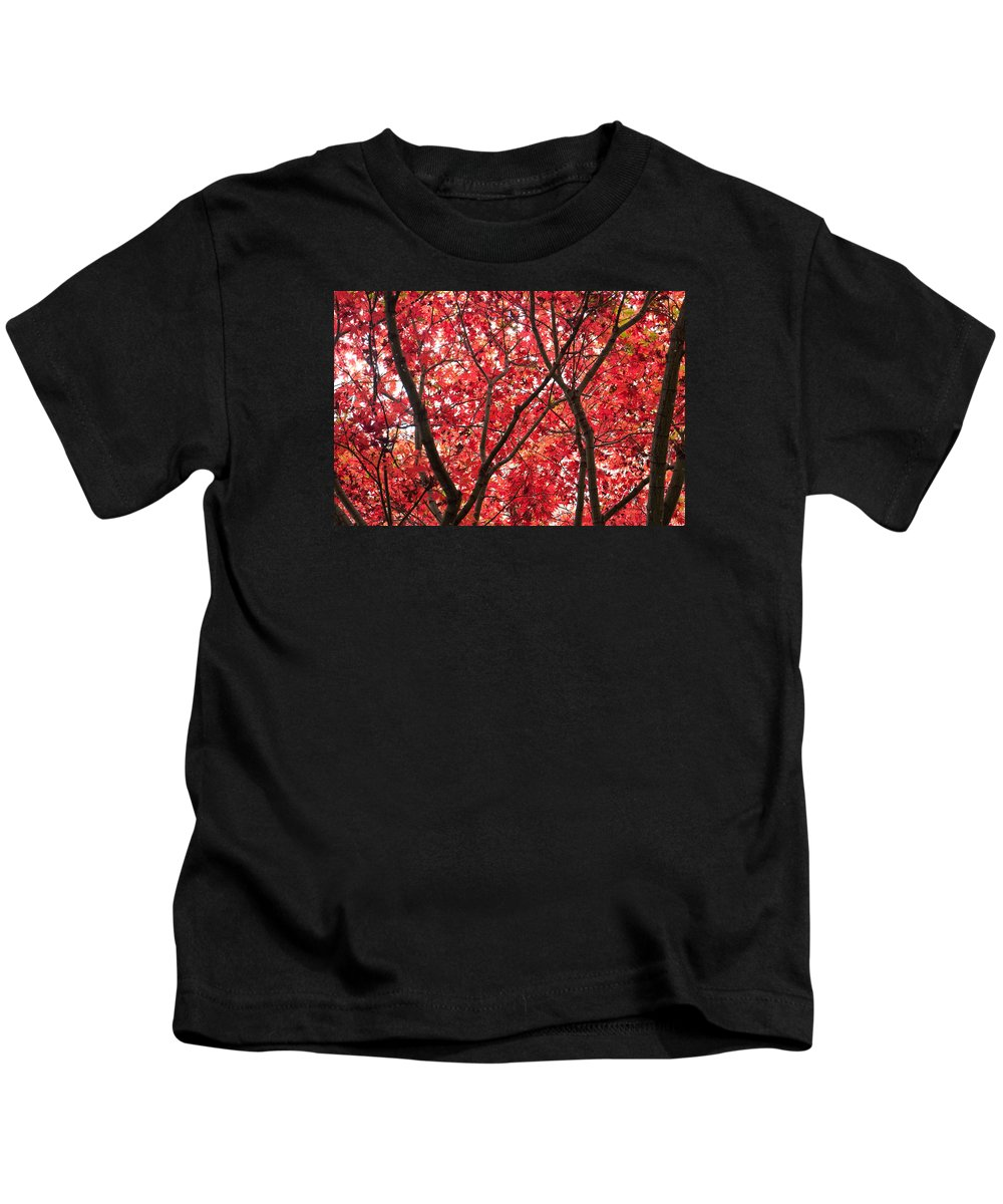 Autumn Kids T-Shirt featuring the photograph Trees Of Autumn by Wendy Le Ber