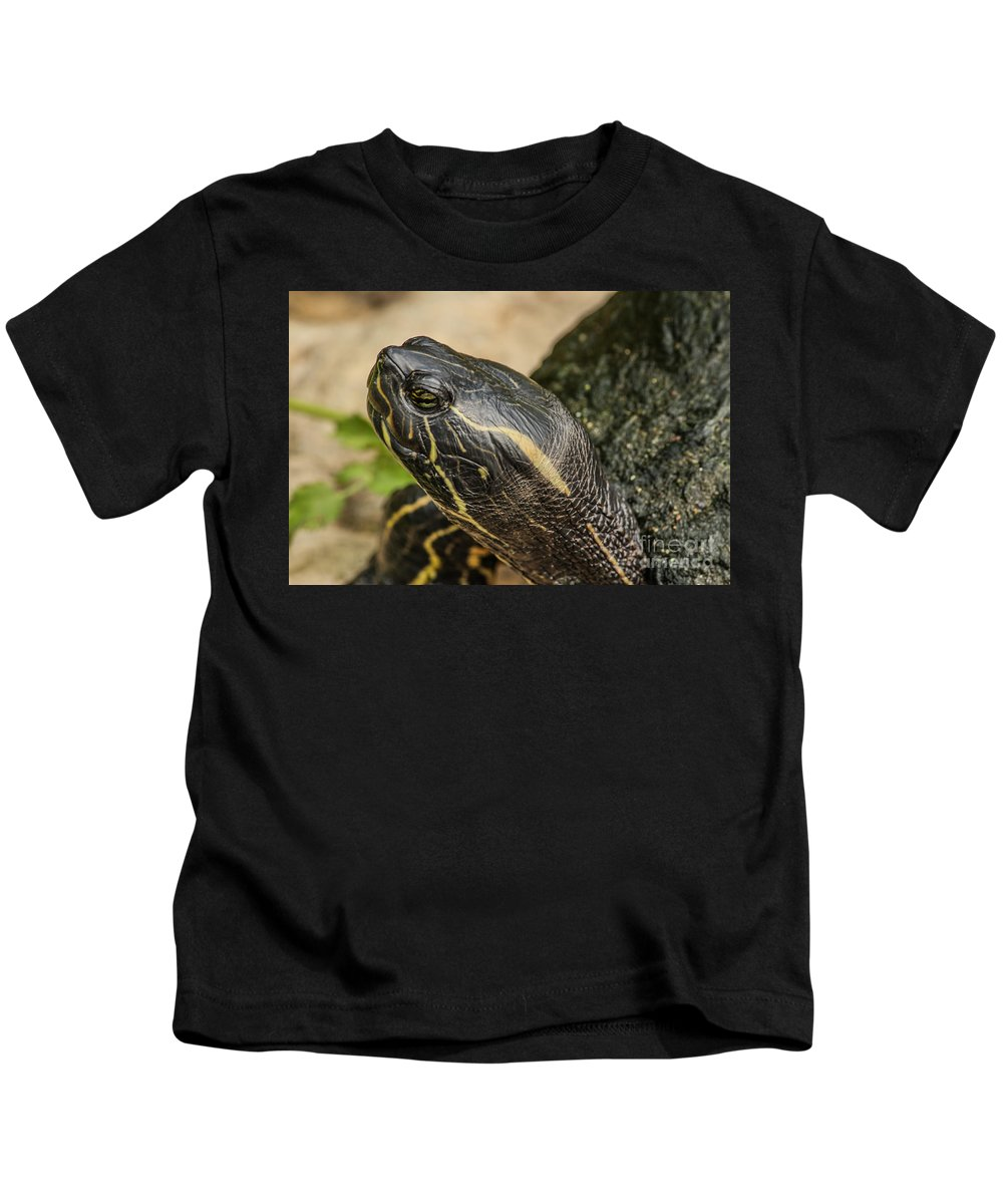 Turtle Kids T-Shirt featuring the photograph Turtle by Lynn Sprowl