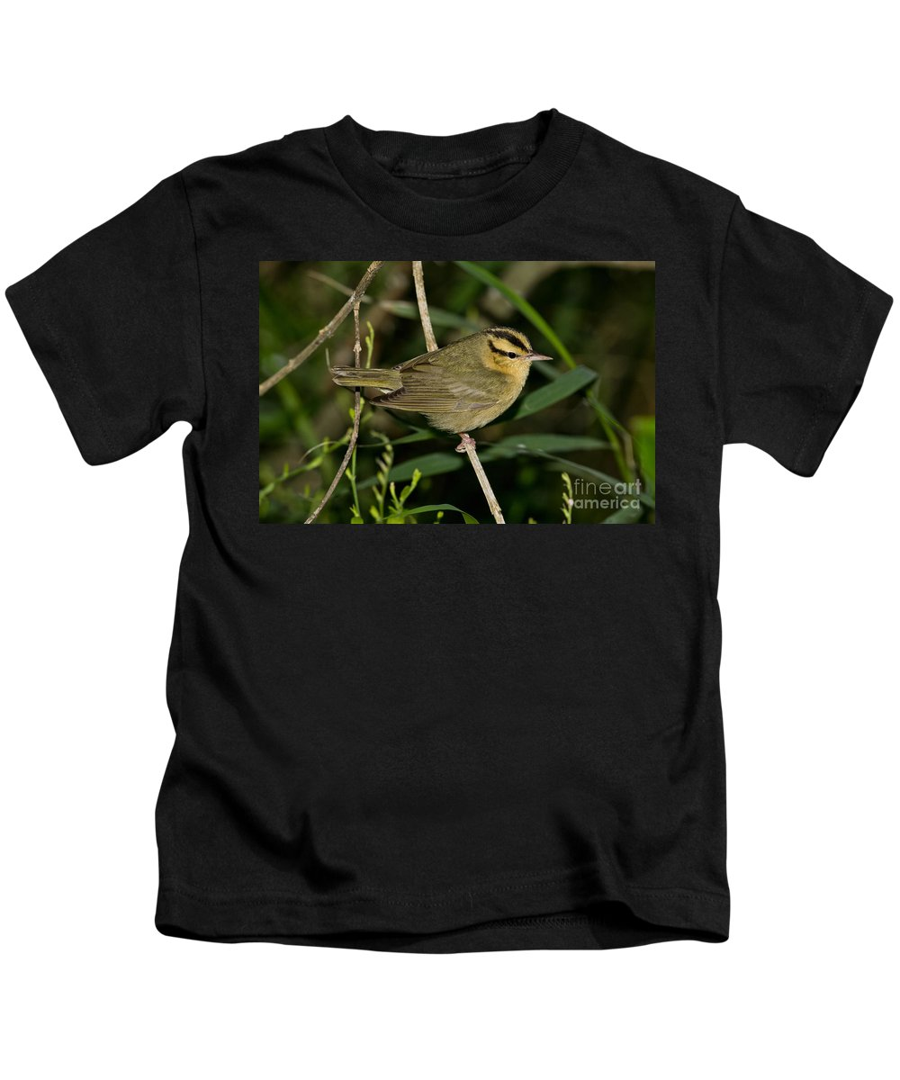 Worm-eating Warbler Kids T-Shirt featuring the photograph Worm-eating Warbler by Anthony Mercieca