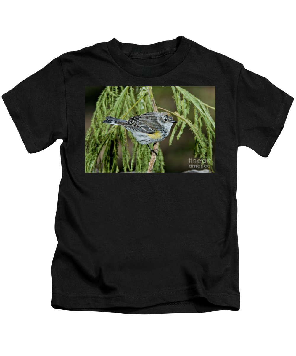 Yellow-rumped Warbler Kids T-Shirt featuring the photograph Yellow-rumped Warbler by Anthony Mercieca