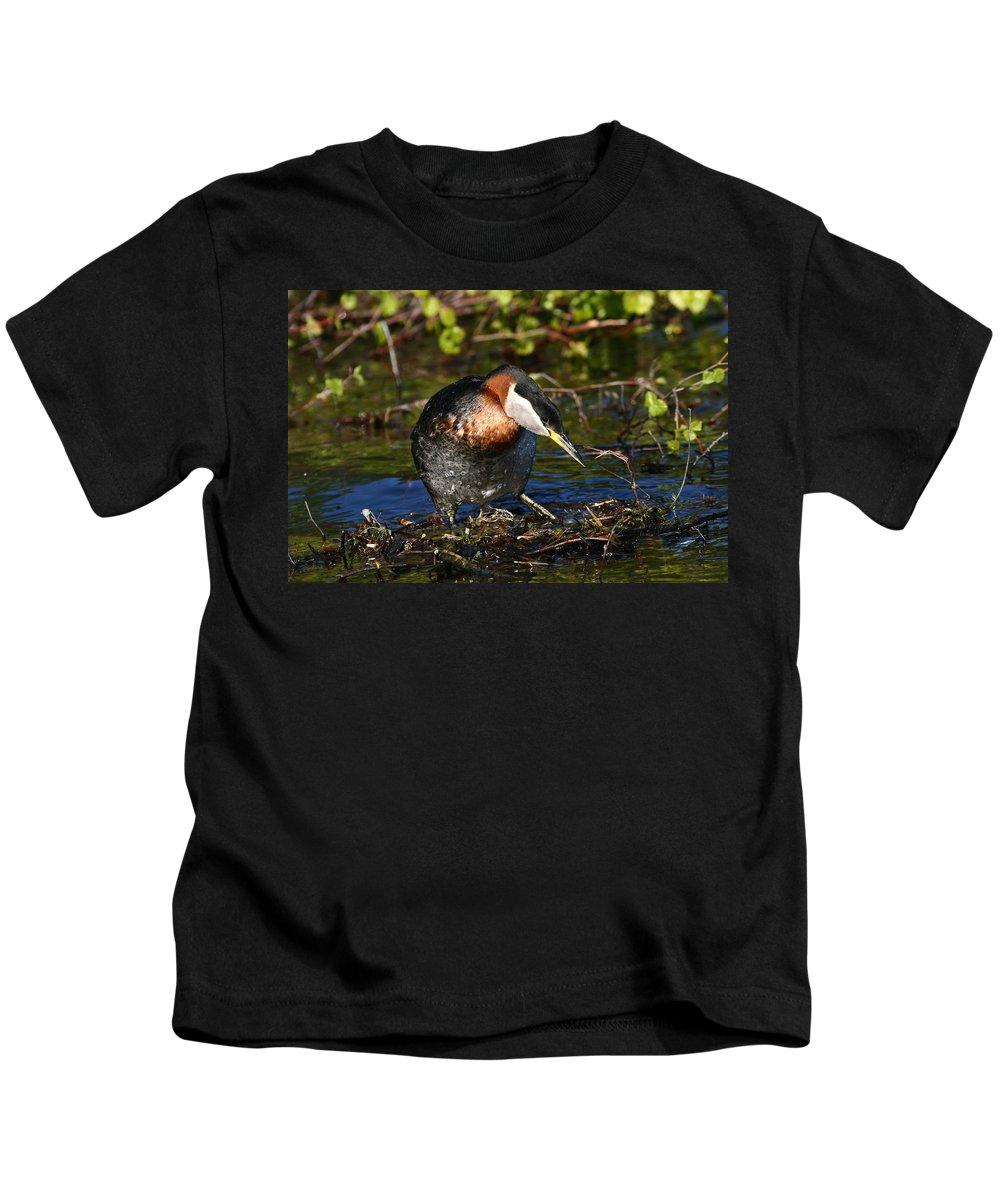 Alaska Kids T-Shirt featuring the photograph Rednecked Grebe by Doug Lloyd
