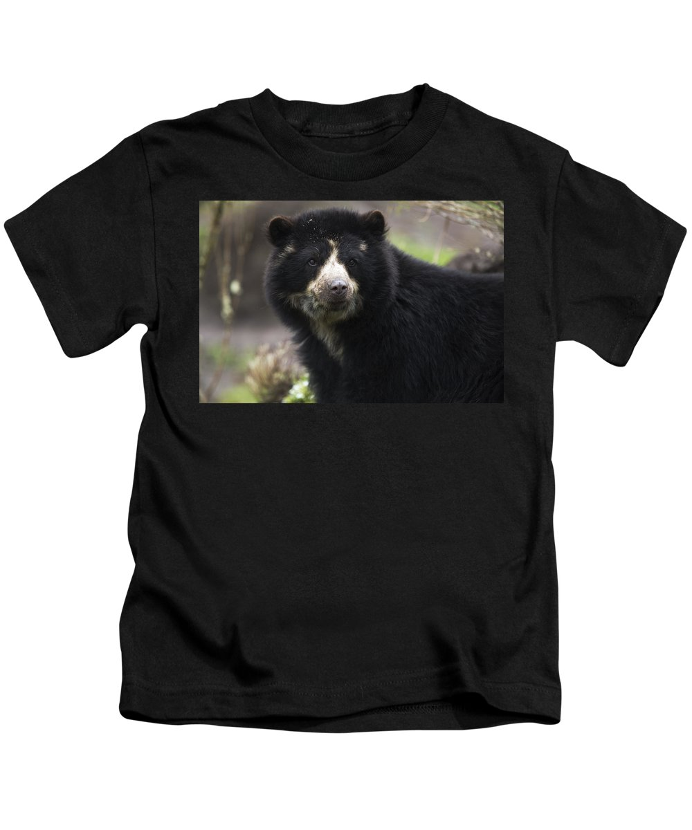 Alertness Kids T-Shirt featuring the photograph Andean Or Spectacled Bear, Tremarctos by Philippe Henry