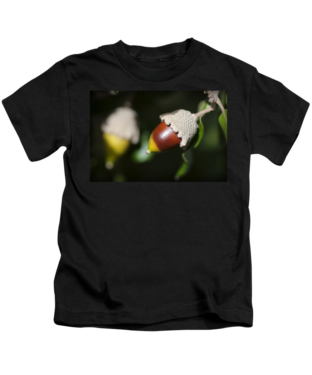 Menorca Kids T-Shirt featuring the photograph autumn fruits - Mediterranean acorn macro by Pedro Cardona Llambias