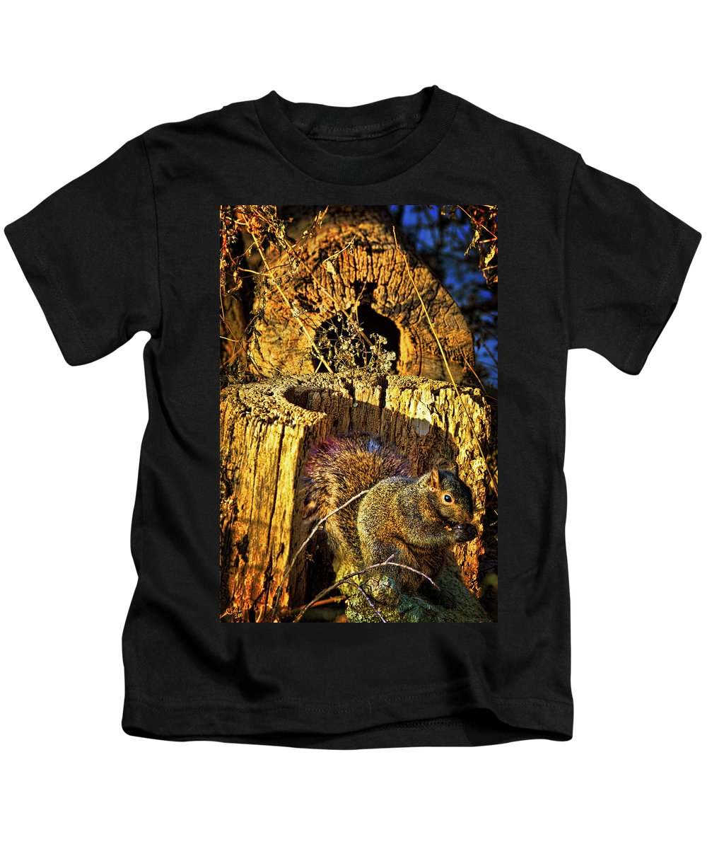 Squirrel Kids T-Shirt featuring the photograph Autumn Rusticana by Chris Lord