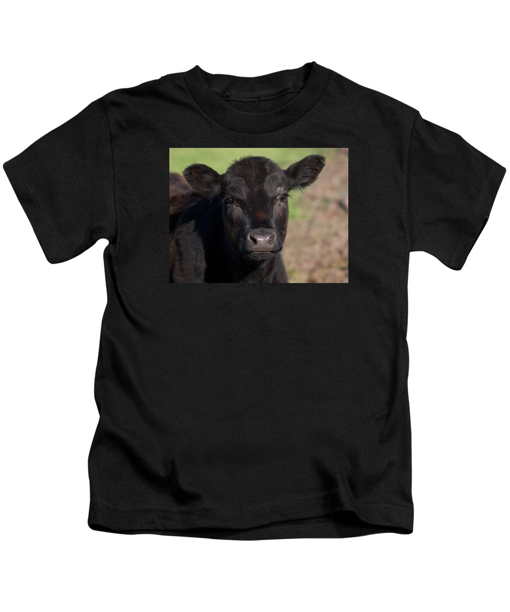 Cow Kids T-Shirt featuring the photograph Black Cow by Randy Bayne