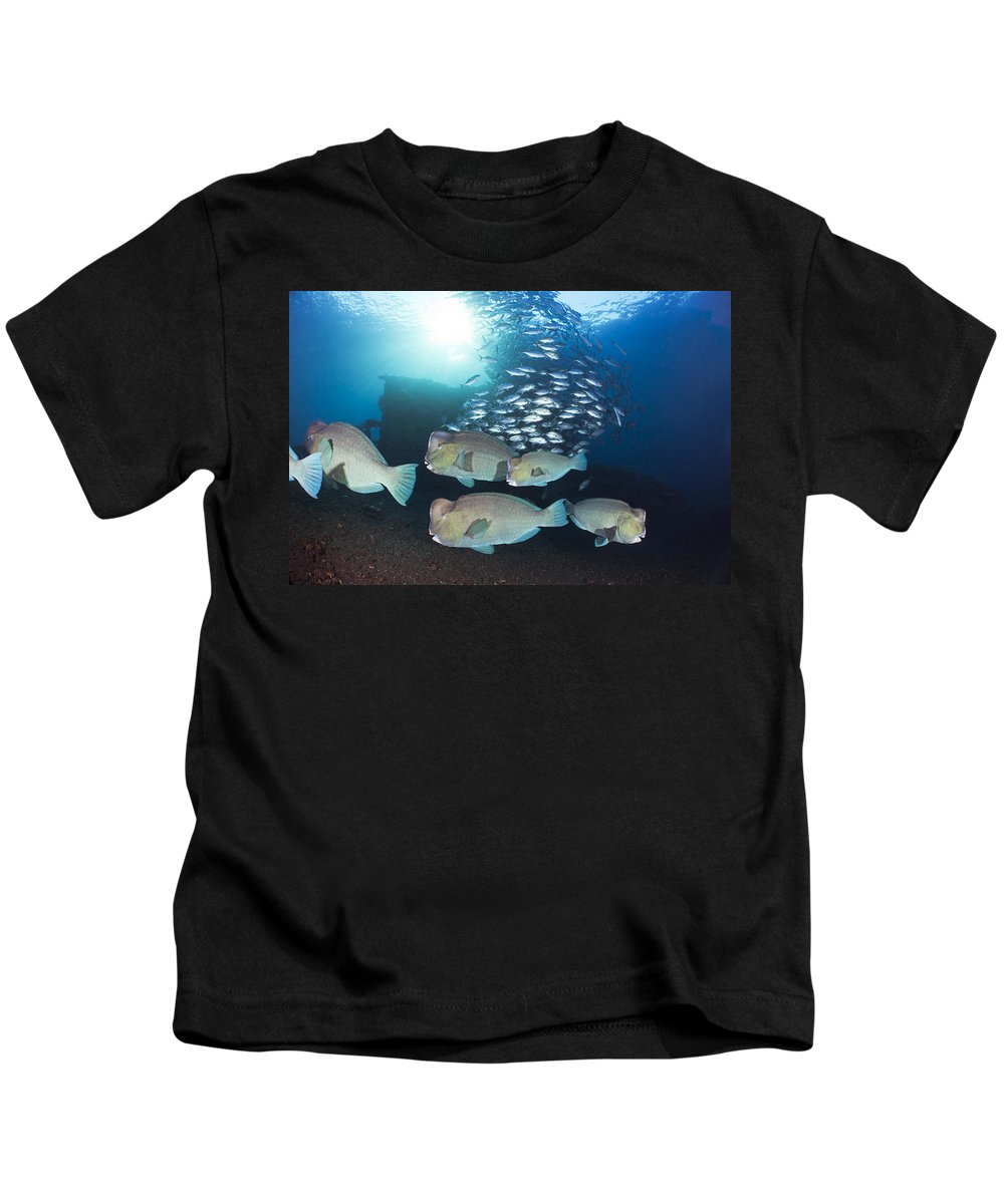 Amazing Kids T-Shirt featuring the photograph Bumphead Parrotfish by Dave Fleetham - Printscapes