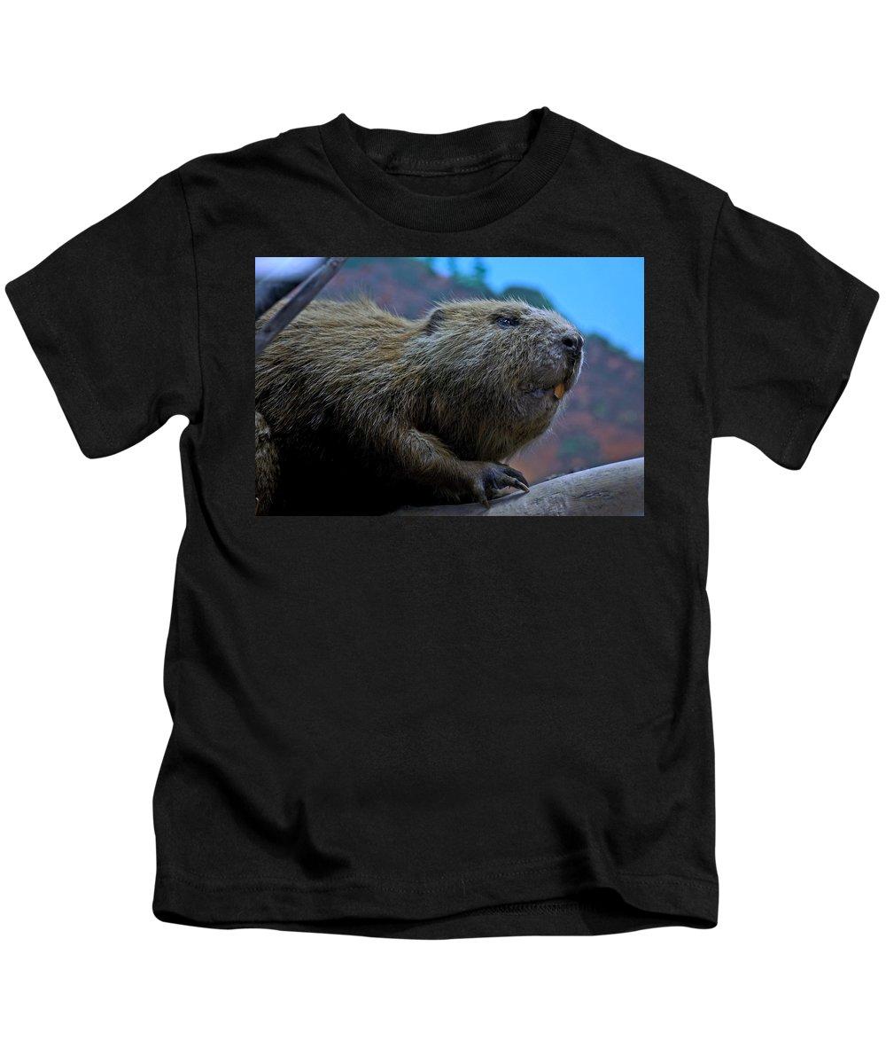 Usa Kids T-Shirt featuring the photograph Busy Beaver by LeeAnn McLaneGoetz McLaneGoetzStudioLLCcom