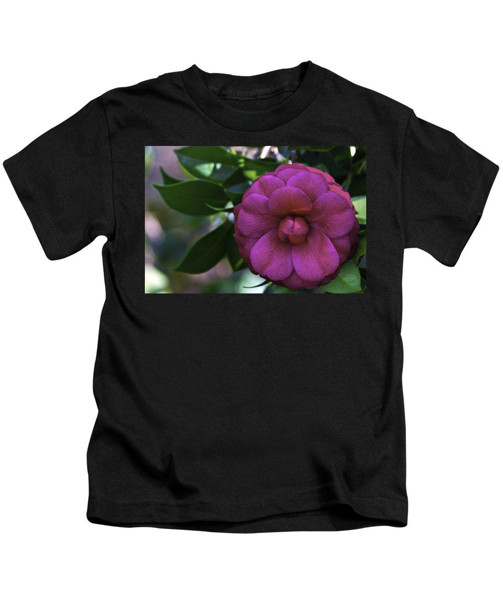 Camellia Kids T-Shirt featuring the photograph Camellia Twenty by Ken Frischkorn