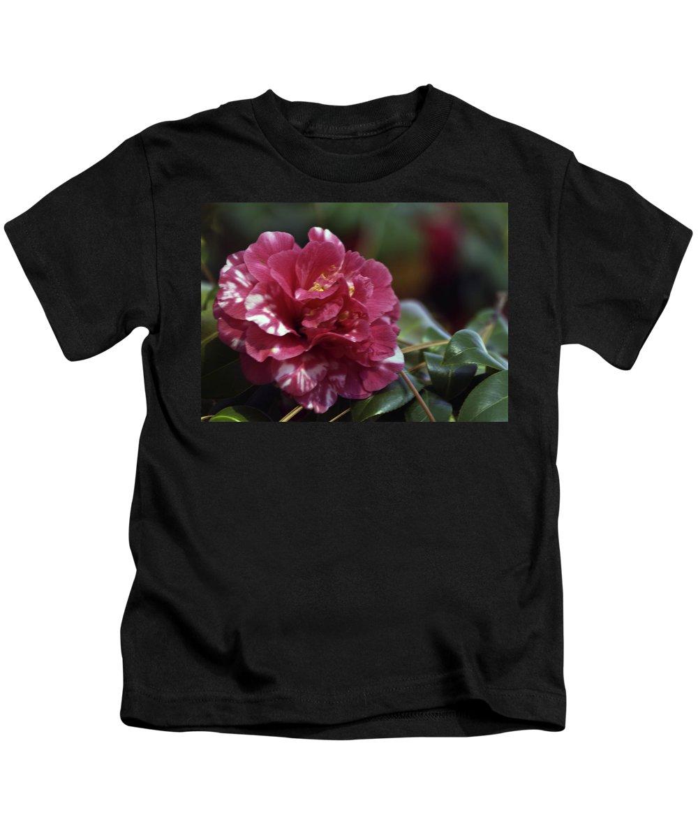 Camellia Kids T-Shirt featuring the photograph Camellia Twenty-one by Ken Frischkorn