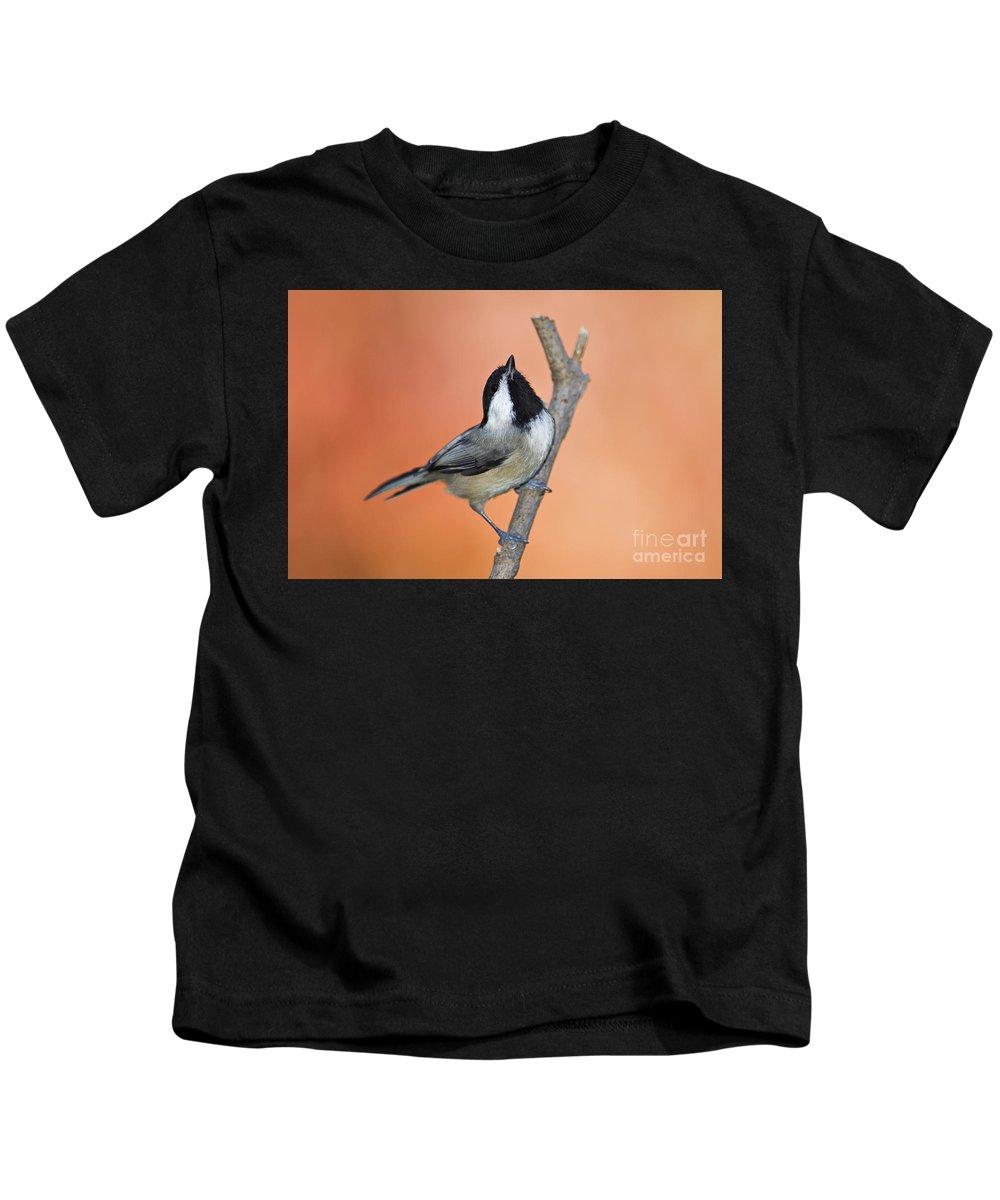 Carolina Kids T-Shirt featuring the photograph Carolina Chickadee - D007814 by Daniel Dempster