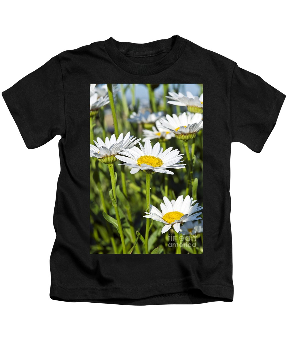 Bellis Perennis Kids T-Shirt featuring the photograph Daisies by John Greim