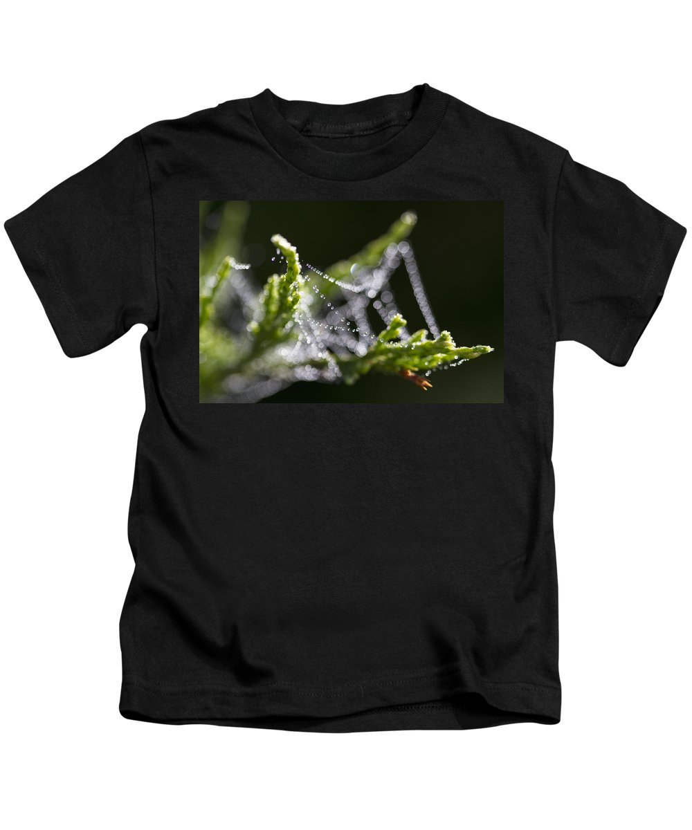 Dew Kids T-Shirt featuring the photograph Dew With The Jitters by Kathy Clark