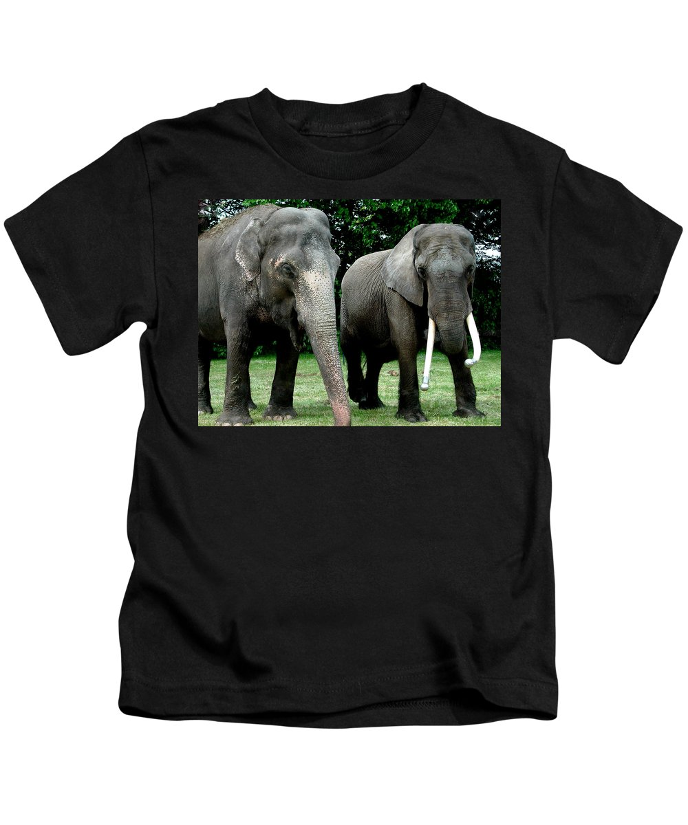 Colette Kids T-Shirt featuring the photograph Elephant Meeting by Colette V Hera Guggenheim