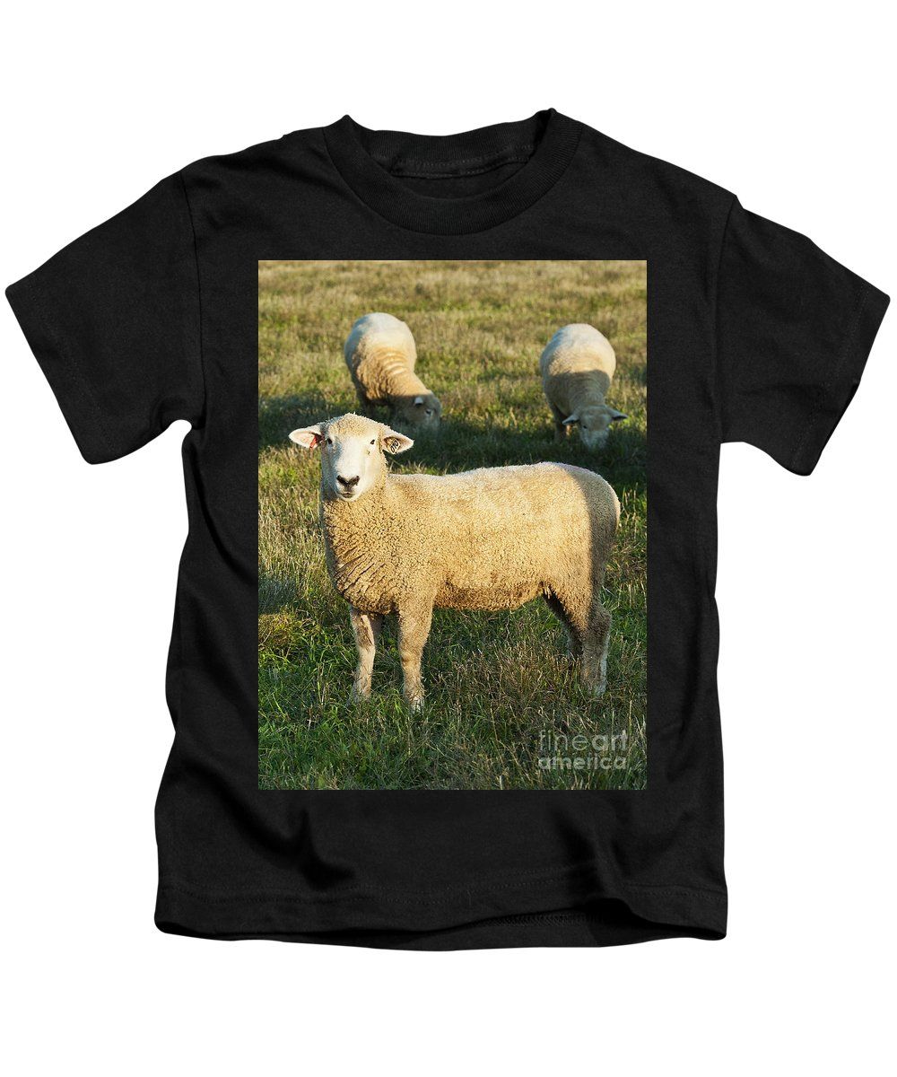 Agriculture Kids T-Shirt featuring the photograph Grazing Sheep. by John Greim