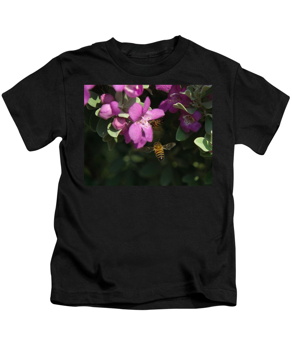 Backyard Kids T-Shirt featuring the photograph Honey Bees On Sage 3 by Sean Wray