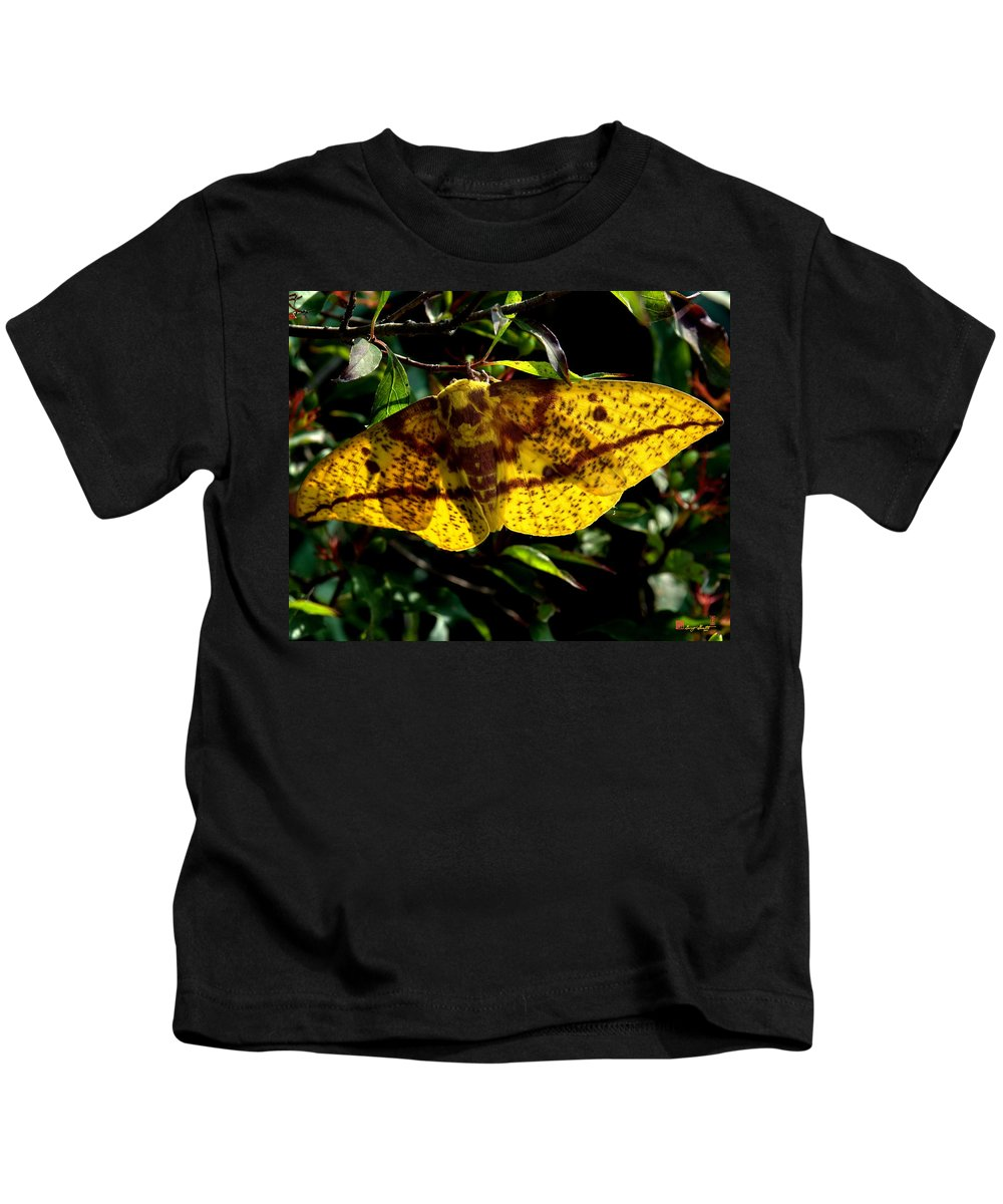 Nature Kids T-Shirt featuring the photograph Imperial Moth Din053 by Gerry Gantt