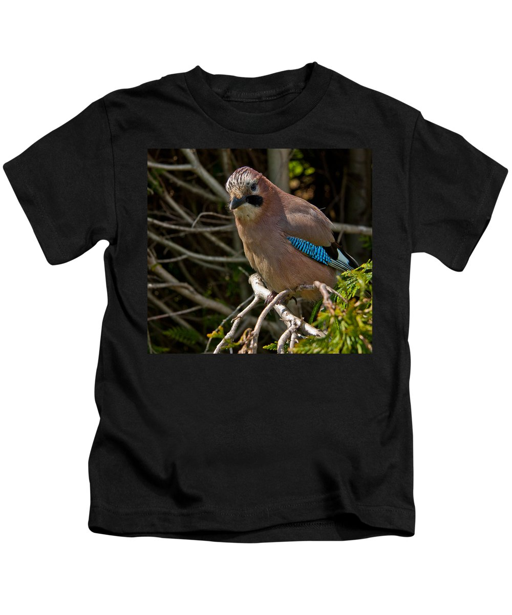Eurasian Jay Kids T-Shirt featuring the photograph Jay by Dawn OConnor