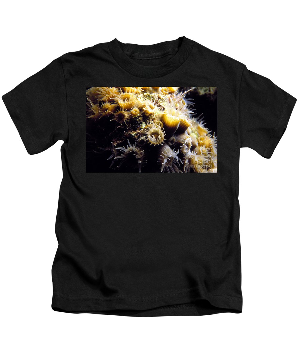 Coral Kids T-Shirt featuring the photograph Live Coral Feeding At Night by Mike Nellums