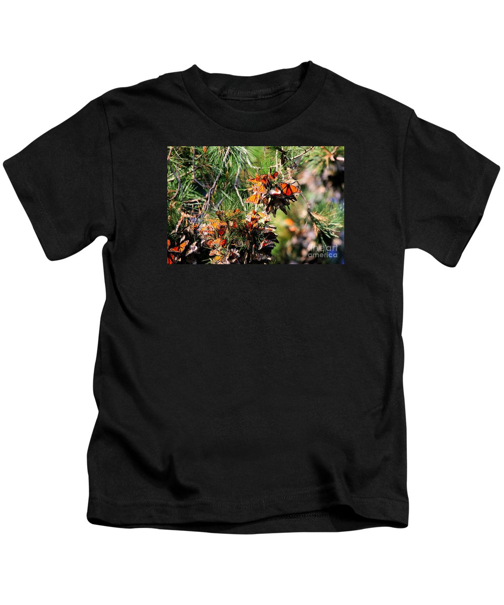 Butterfly Kids T-Shirt featuring the photograph Monarch Butterfly Gathering by Tap On Photo