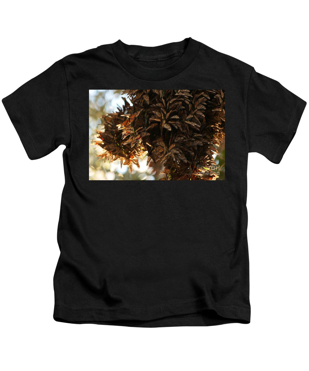 Butterfly Photographs Kids T-Shirt featuring the photograph Monarch Jumble by Brooke Roby