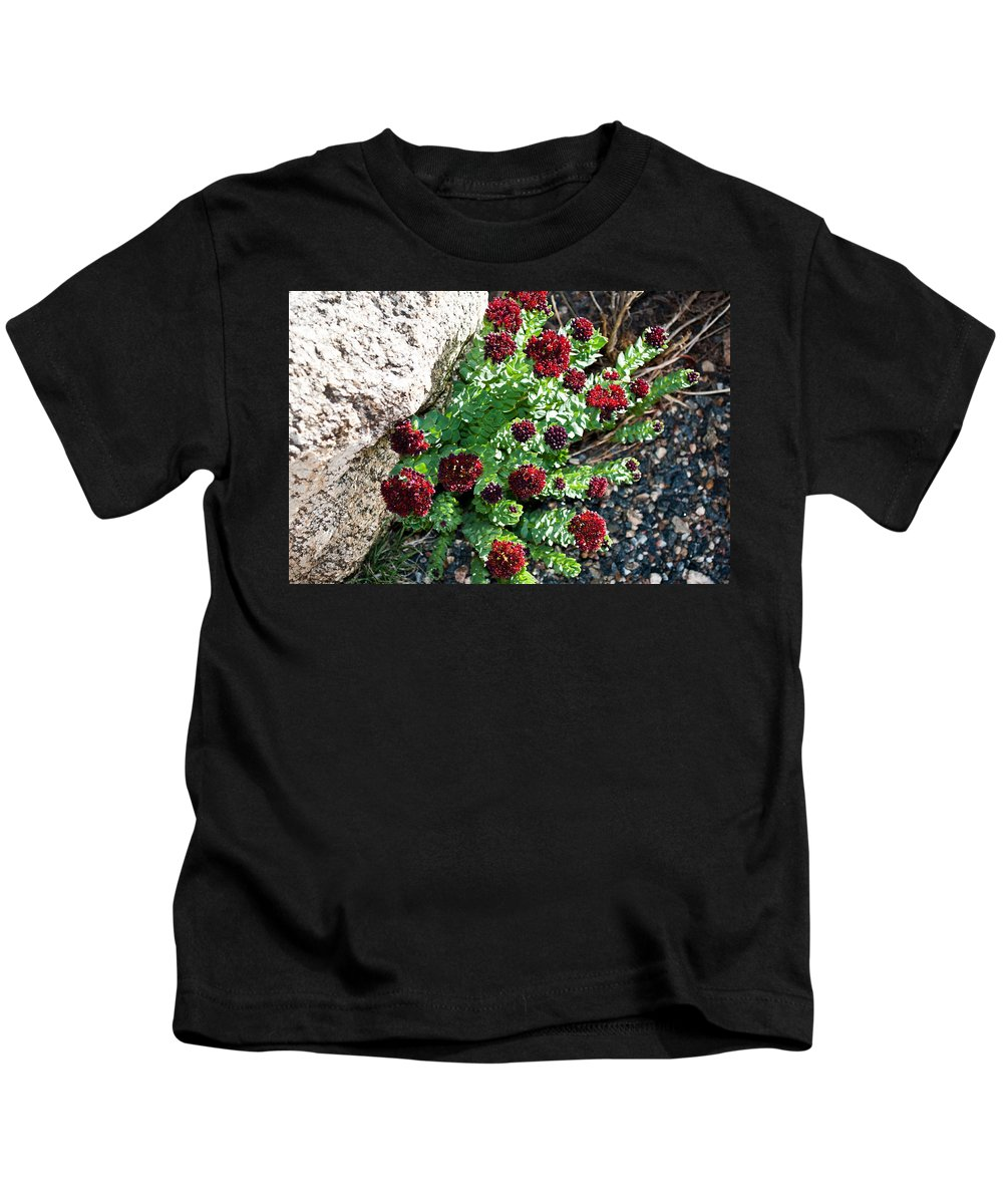 Mount Kids T-Shirt featuring the photograph Mountain Blooms by Colleen Coccia