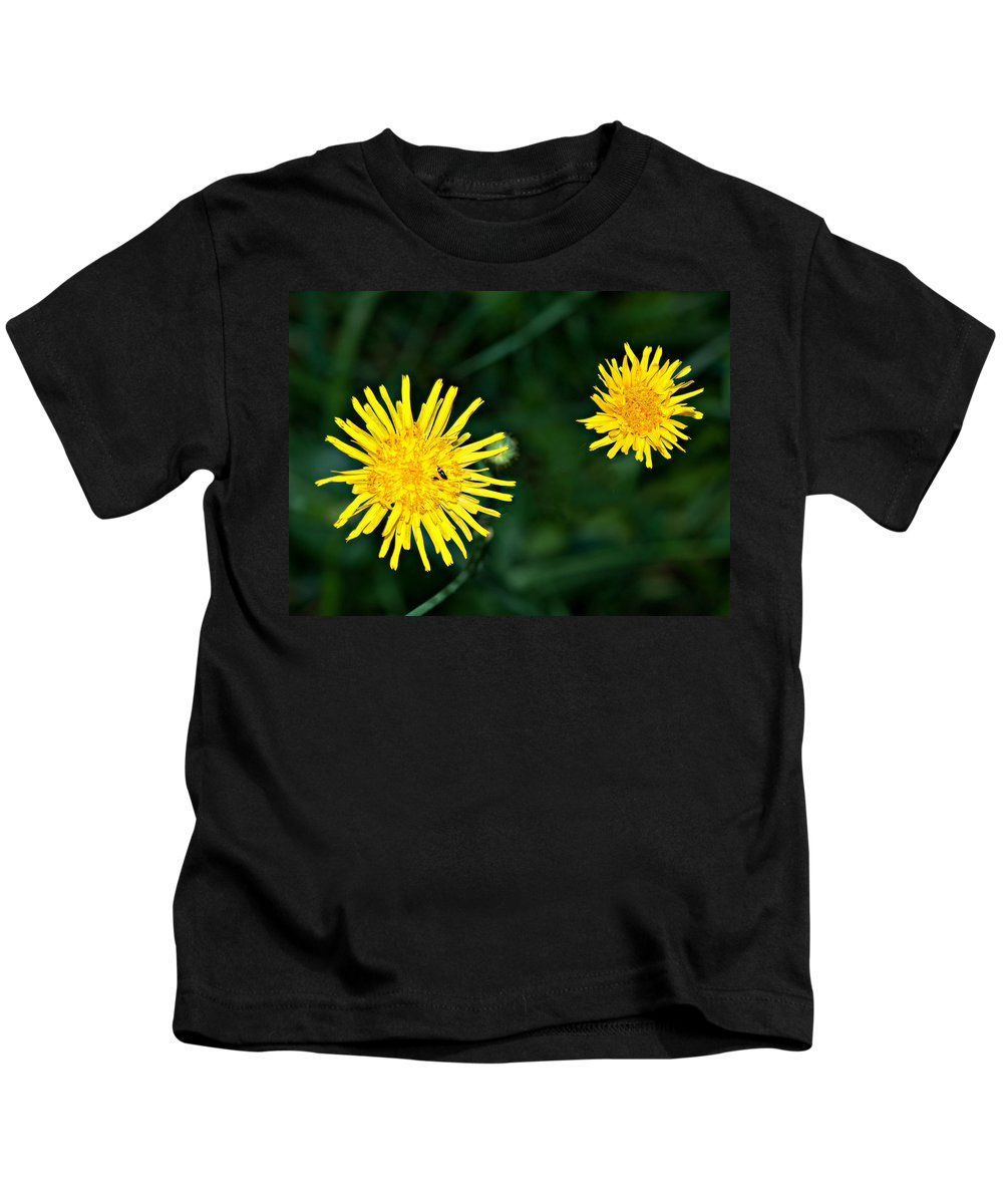 Flowers Kids T-Shirt featuring the photograph Perennial Sow-thistle by Steve Harrington