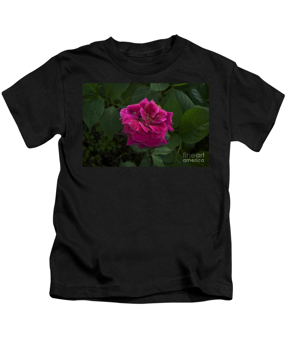 Red Kids T-Shirt featuring the photograph Perfect Red Rose by Catherine Conroy