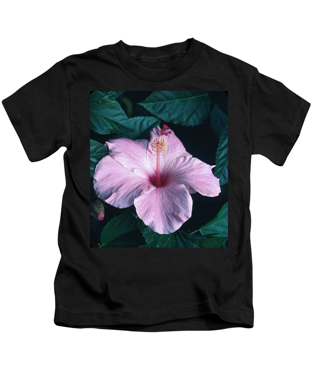 Pink Hibiscus Flower Kids T-Shirt featuring the photograph Pink Hibiscus by Sally Weigand