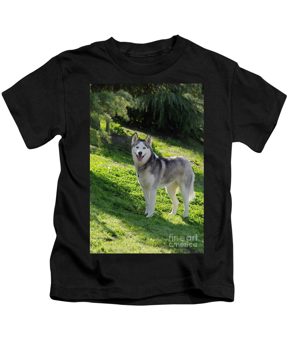 Dog Kids T-Shirt featuring the photograph Siberian Husky by Jim And Emily Bush