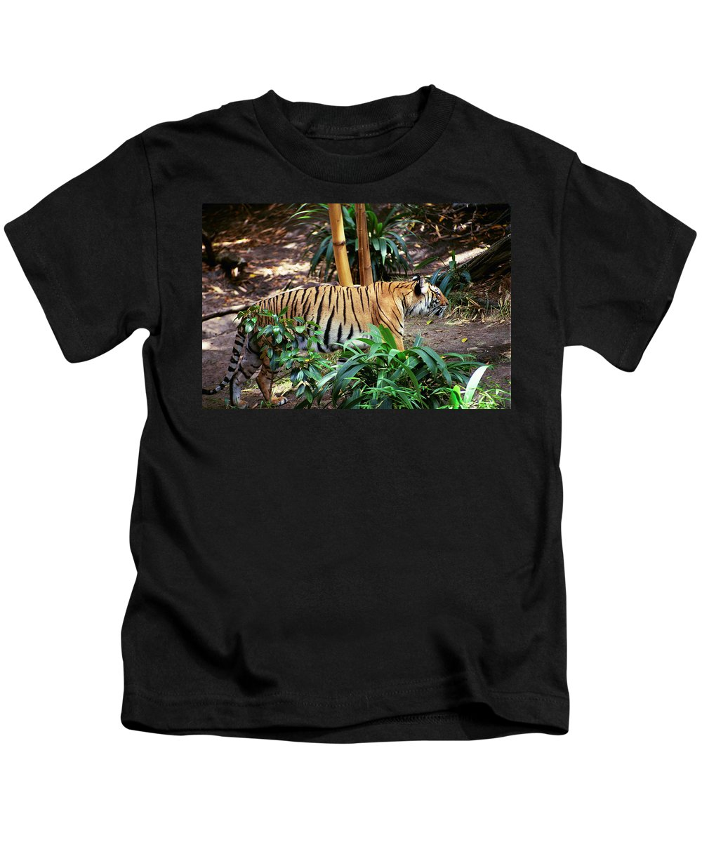 Kids T-Shirt featuring the photograph Stalking by Michael Frank Jr