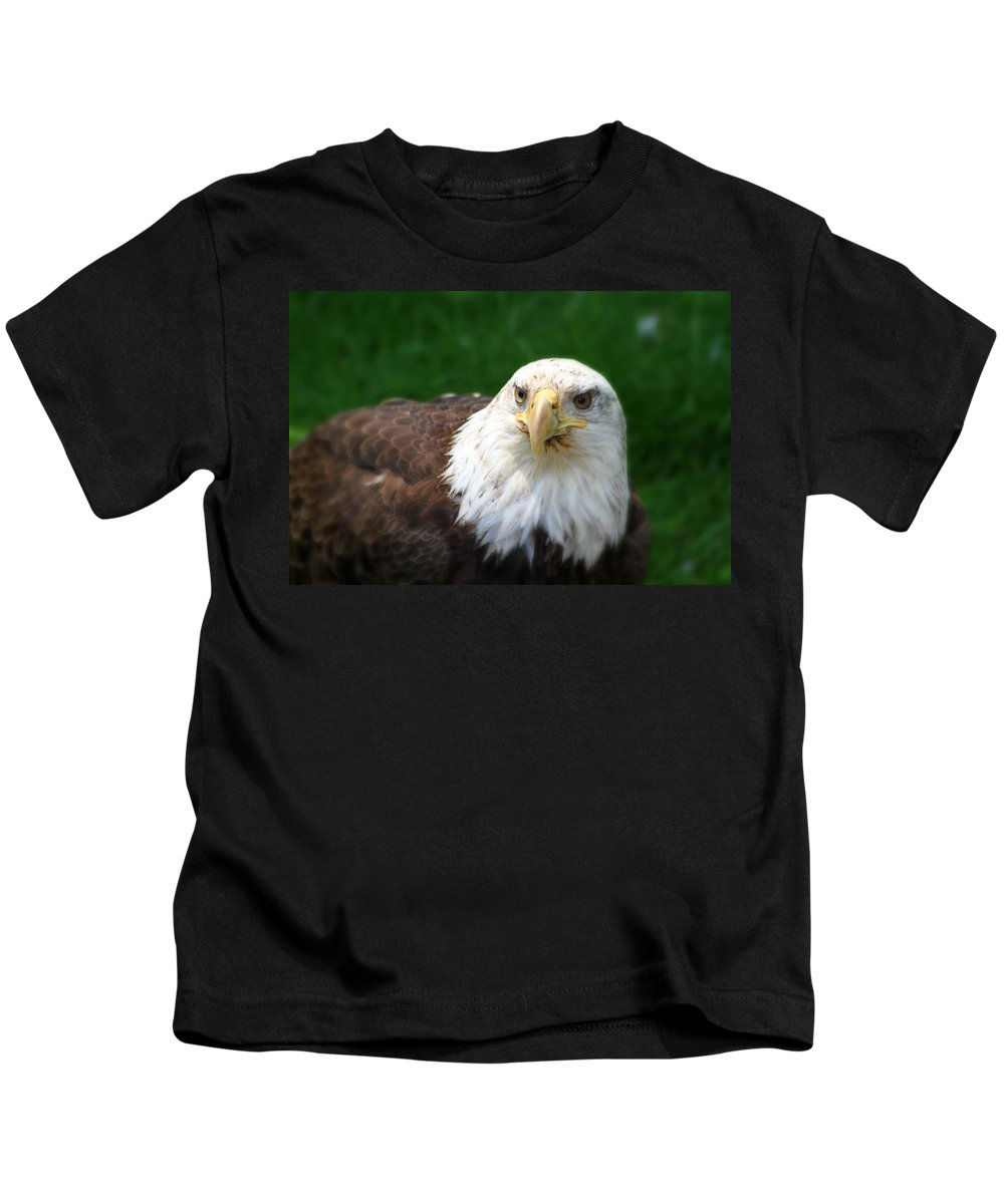 Bald Eagle Kids T-Shirt featuring the photograph Summer Bald Eagle by Karol Livote