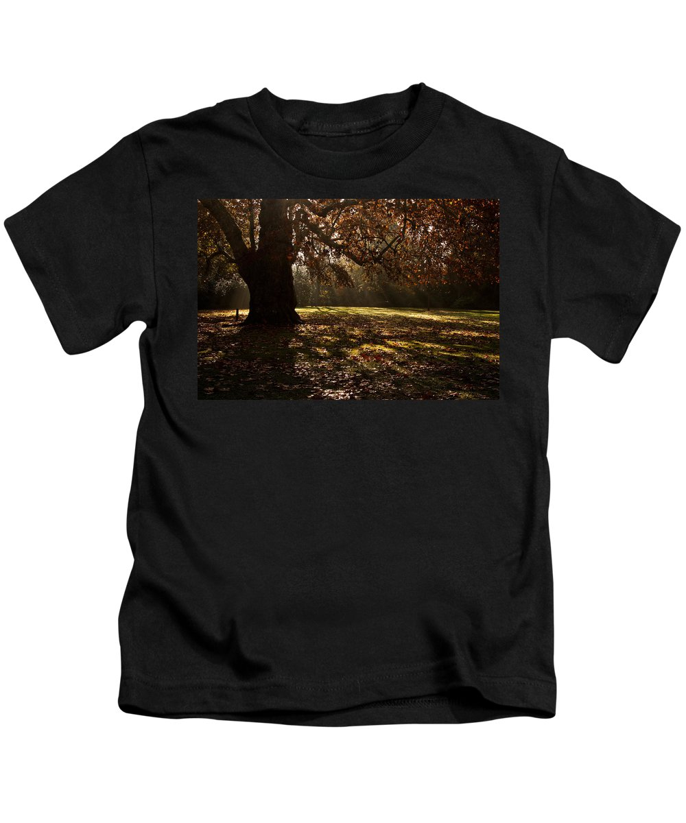 Sunlight Kids T-Shirt featuring the photograph Sunlight In Trees by Dawn OConnor