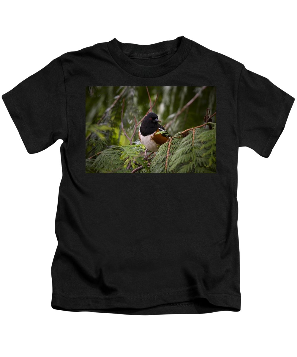 Towhee Kids T-Shirt featuring the photograph Towhee by Martin Cooper
